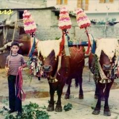 Santu Sidoru 1977